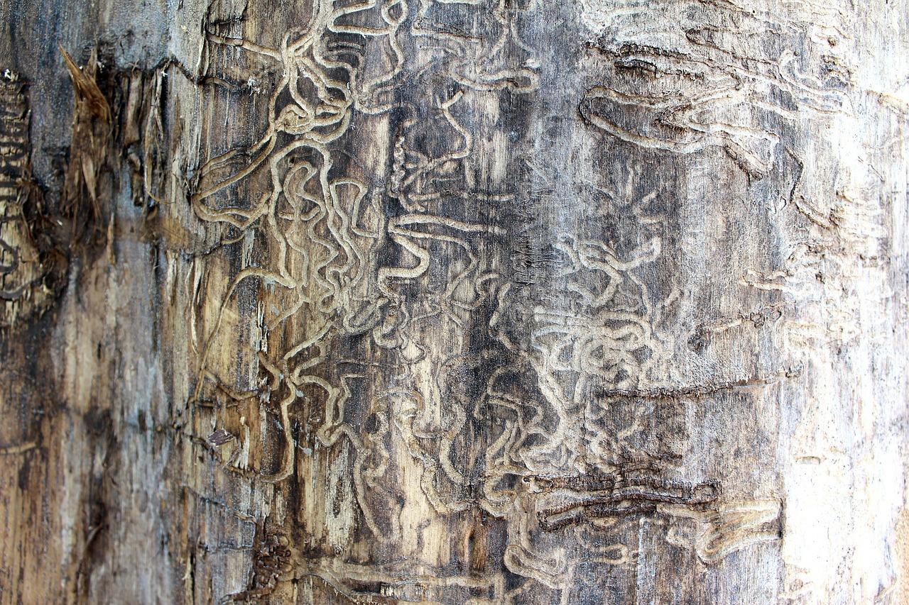 termite-71313_1280